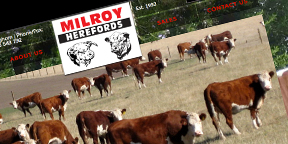 Milroy Herefords